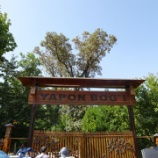 『ウズベキスタン旅行記51 日本庭園(Yapon Bogi)で本物のコウノトリをウォッチ!』の画像