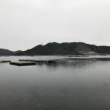 『サヨリ 鳴門ウチノ海(2019/1/12)』の画像