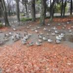 新・小鳥記2(鳥好き中1男子の鳥日記)