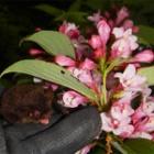『卯の花の咲くころ』の画像