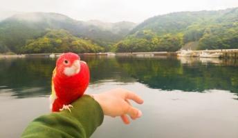 海賊王に憧れて、火の鳥と一緒にヨットで日本一周してるバカだけど【中部・近畿】
