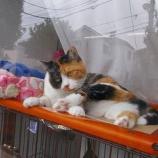 『現場猫(2)』の画像