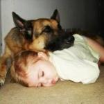 【カナダ】原野を3か月さまよったハイカー「愛犬を殺して食べて生き延びた」に賛否両論!