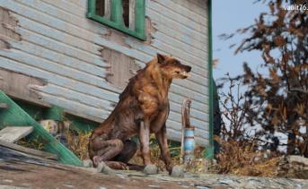 ウルフ(Wolf)