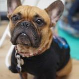 『ついにデビュー!?看板犬アグーに地域情報誌「BonNo」の取材がきました!』の画像