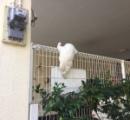 【画像】 かなり変わった寝相の猫が見つかる ⇒ めっちゃ評判の猫でした