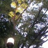 『後谷公園前ライトアップ』の画像
