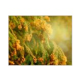 『黄砂に花粉に大変(ーー;)』の画像