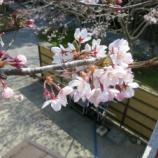 『【はまつーフォトコン】春ですね!桜が綺麗なので浜松周辺の桜の写真を募集してみるよー! - 4月20日(水)まで』の画像
