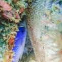 ソラスズメの保育(卵保護)