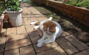 庭で「スコ座り」するニャンコ