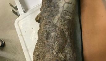 【衝撃】皮膚や爪の残る「恐竜のミイラ」がアメリカで発見(写真あり)
