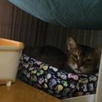 キャットサロン・猫のひなたぼっこのblog