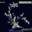 東出昌大「不倫願望」と題した生け花を3年前に番組で披露していたwww