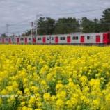 『◆菜の花畑にて 筑肥線めぐり①』の画像