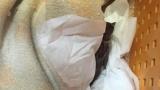 【超緊急】猫に噛まれて弱ったスズメ保護した(※画像あり)