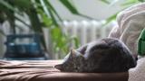 【悲報】ワイニートの平均睡眠時間が長すぎると話題に