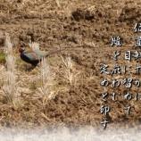 『雄の定め』の画像