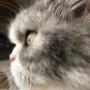 猫の近くで撮影を続けたら・・・