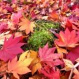 『感謝 紅葉の中で。』の画像