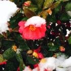 『36年前も大雪のバレンタインディー』の画像