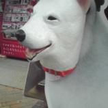『川口・樹モール商店街のお父さん犬広告続報』の画像