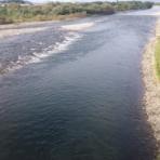 鮎釣り・サクラマス釣りの九頭竜川中部漁業協同組合