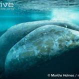 『 シッダ医学とクジラの長寿』の画像