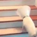 犬が「エリザベスカラー」をつけていた。そのせいで階段がうまく登れない。ならば! → 犬はこうした…