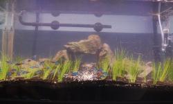 【画像】1ヶ月後にはこの水槽が草原みたくなるはずなんだ