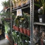 『パリ: 図書館で観葉植物交換』の画像