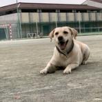 動物介在教育-Animal Assisted Education-