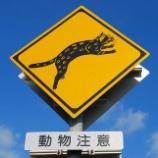 『イリオモテヤマネコの交通事故』の画像