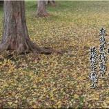 『木の葉時雨』の画像