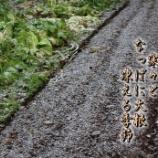 『冬越しのなっぱ』の画像