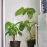夏の植物のお世話あれこれ