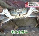 【画像】河原にゾロゾロ カニが大量発生 静岡市