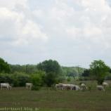 『ハンガリー旅行記30 馬がお座りする!騎馬民族伝統のハンガリー馬術ショーが凄い!!』の画像