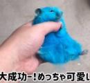 ハムスターを真っ青に染めるYouTube動画に批判殺到