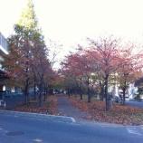 『戸田市鍛冶谷町緑地に晩秋の感が漂っています』の画像