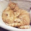FIP(猫伝染性腹膜炎)について。