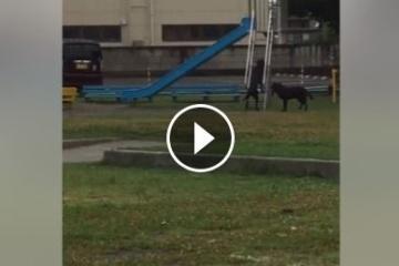 海外「日本は犬まで知能が高い」公園で滑り台を滑るワンちゃんに胸キュンする海外