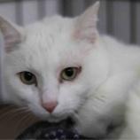 『【里親募集中】日本猫のマル』の画像