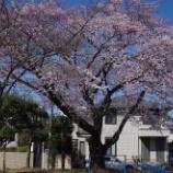 『お花見』の画像