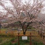 『【たまゆら聖地巡礼】竹原桜めぐりドライブ・前編』の画像