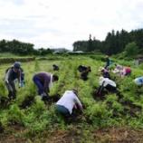 『八ヶ岳自然栽培のジャガイモを使ったヴィーガンコロッケ』の画像