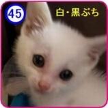 『里親募集 【すー】45』の画像