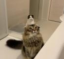 猫の頭から猫がニョキッ...! 遠近法が生んだ「奇跡の一枚」に思わず二度見
