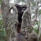 『樹洞探索』の画像