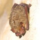 『テングコウモリの越冬洞』の画像